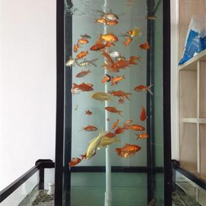 负压鱼缸也可以自行DIY制作?4个简单的步骤仅供参考